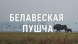 Адзін дзень з фатографам зь Белавескай пушчы